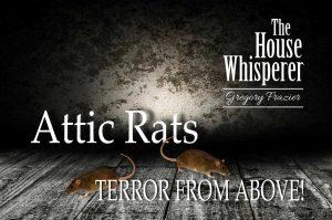 attic rats