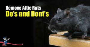 Remove Attic Rats