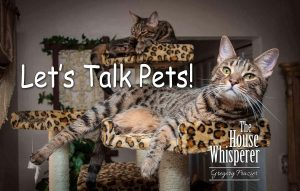 lets talk pets