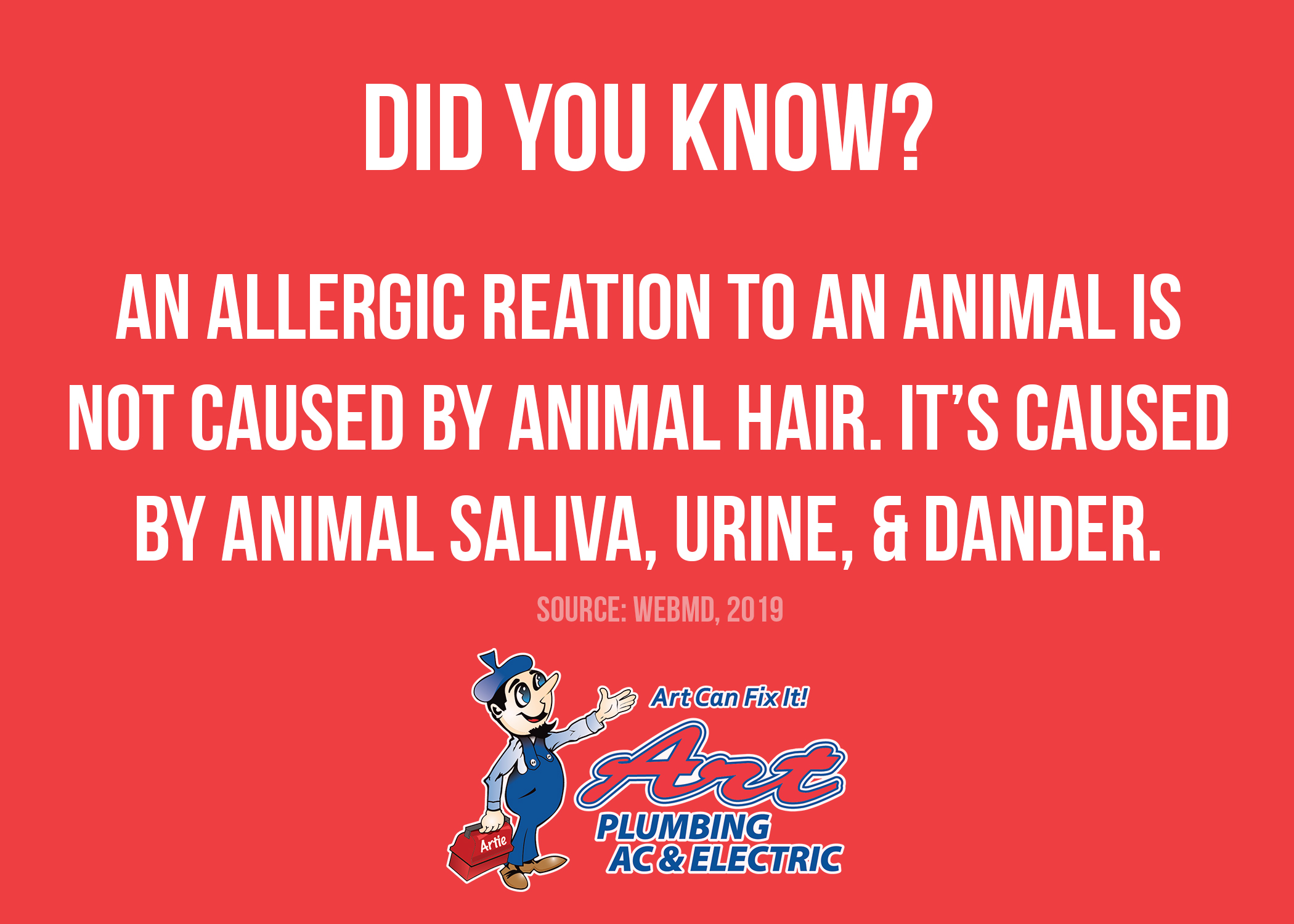 Did You Know An Allergic Reaction To An Animal Isn't Caused By Animal Hair?